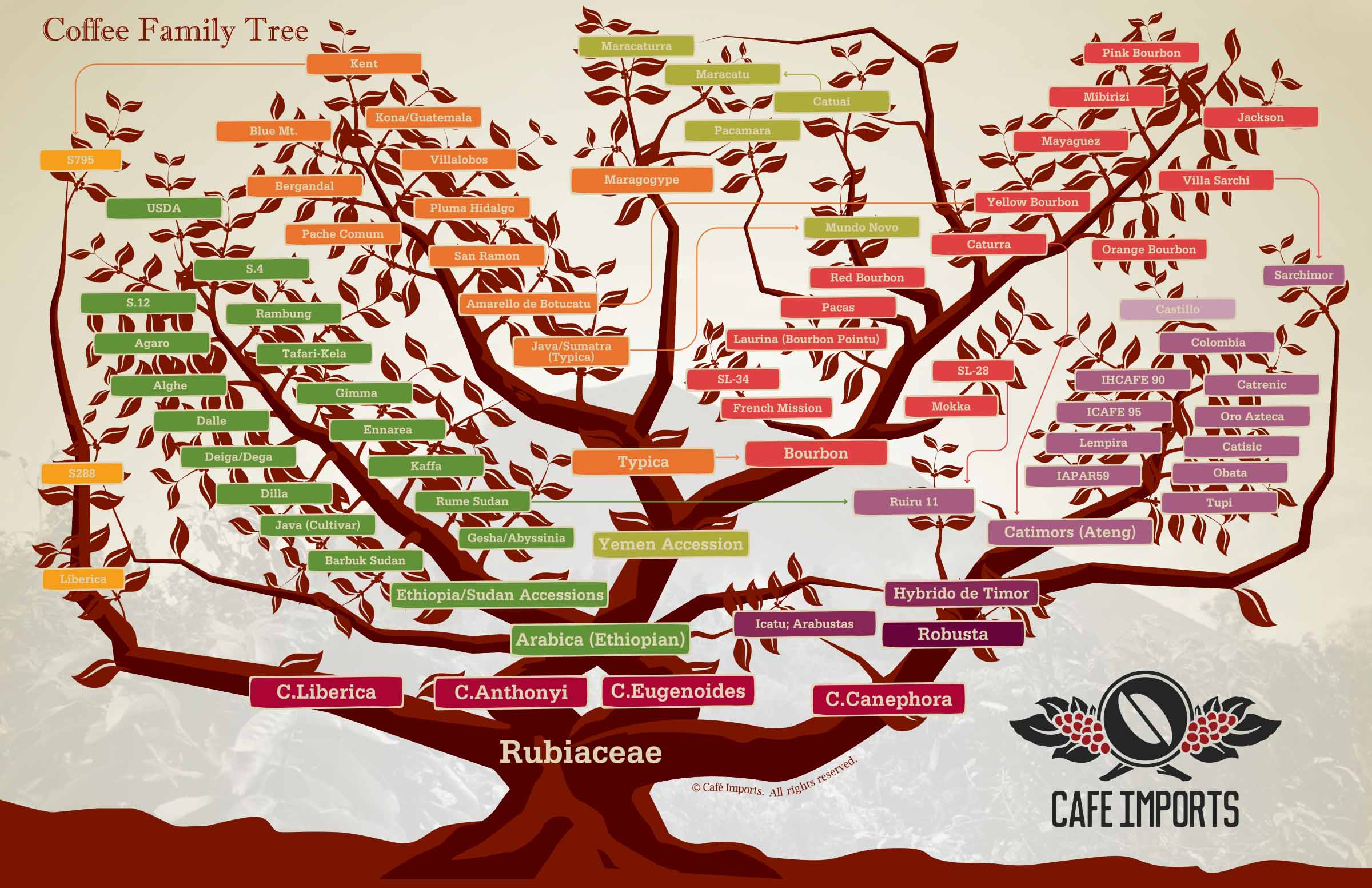 the characteristics of coffee and the history of coffee making History of coffee in guatemala a good, readable book about the role of coffee in guatemalan history from arbenz through the peace accords is daniel wilkinson.