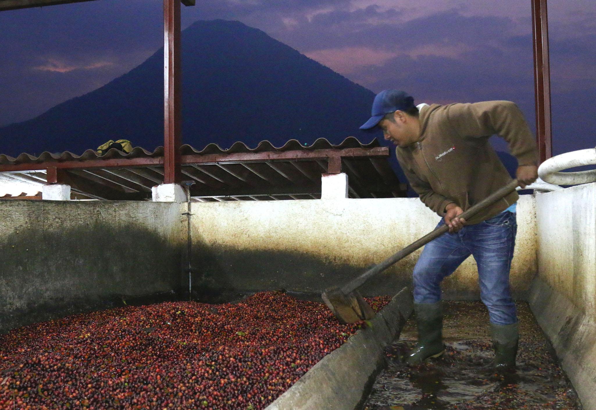 Cafe Imports Guatemala