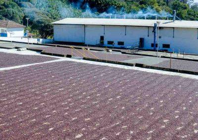 Brazil Natural Processing at Fazenda Recreio, Sul de Minas, Brazil.