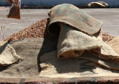 Honey coffees are sometimes piled up and/or covered to ferment.