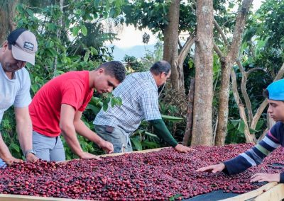 Natural coffees will ferment while they are drying.