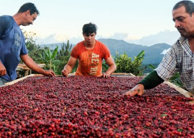 Natural coffee processing. El Pilon Micromill, San Isidro de Leon Cortez, Costa Rica.