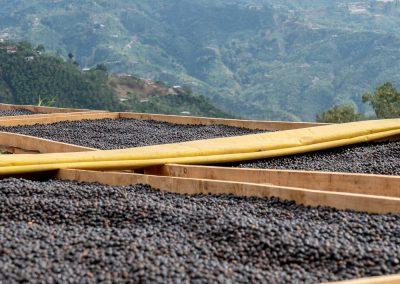 Natural coffee processing. Don Pepe Micromill, San Isidro de Leon Cortez, Costa Rica.