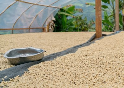 Drying washed coffee parchment, Agua Colorada, Cajamarca, Peru.