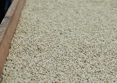 Drying washed coffee parchment, Finca La Papaya, Saraguro, Ecuador.