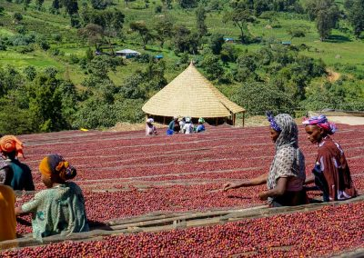Natural coffee processing. Kayon Mountain Farm, Guji, Ethiopia.
